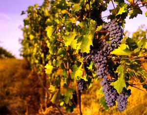 Wine Photo 11