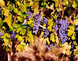 Wine Photo 7
