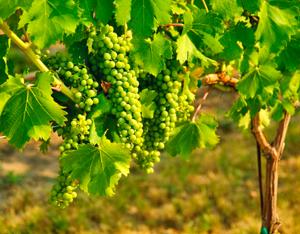 Wine Photo 9