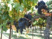 Sonoma: A Wine & Food Affair
