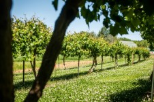 Tuscany Getaway: Wine and Relaxation