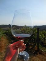 Off the Beaten Path: Growing Wine Regions