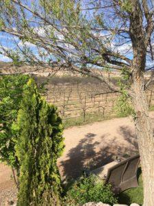 Wine in the Desert: Arizona