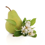 Tulalip Pear